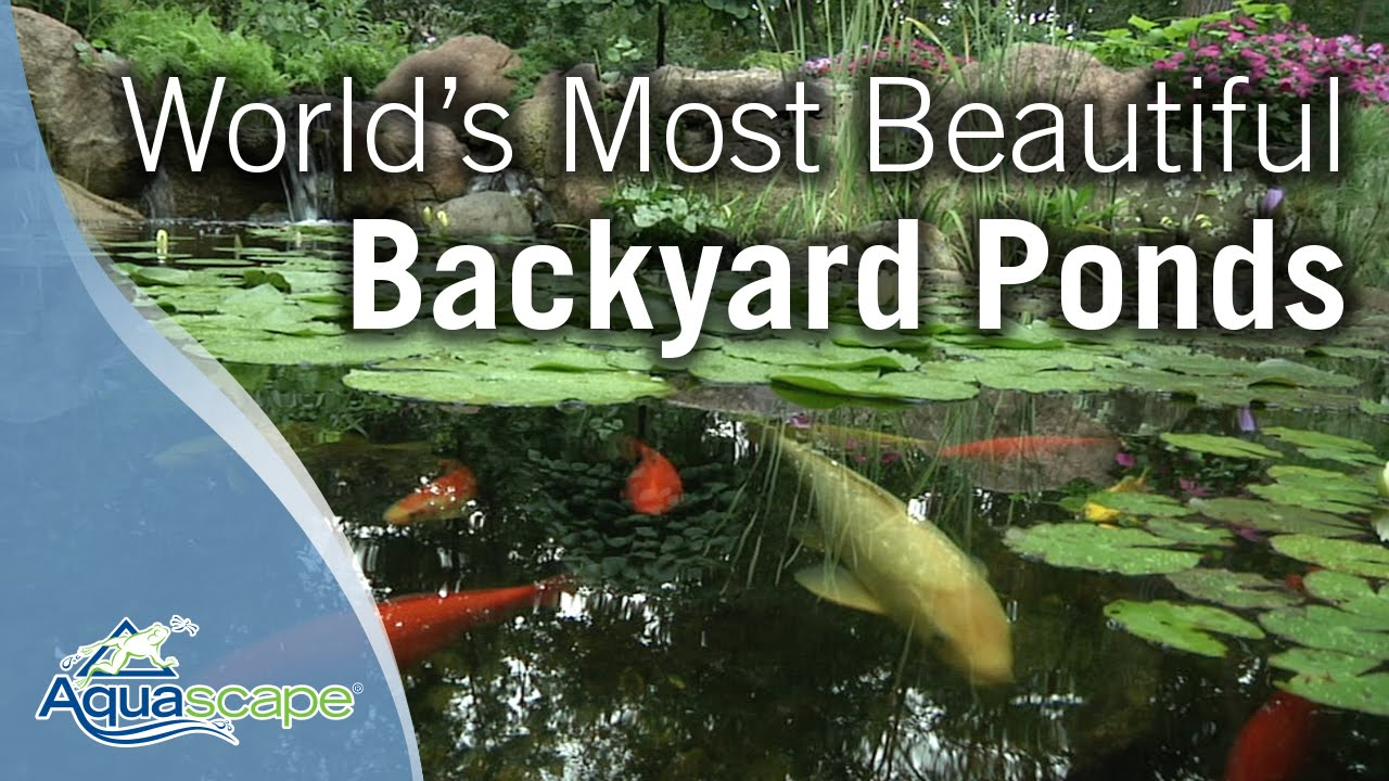 - World's Most Beautiful Backyard Ponds - YouTube