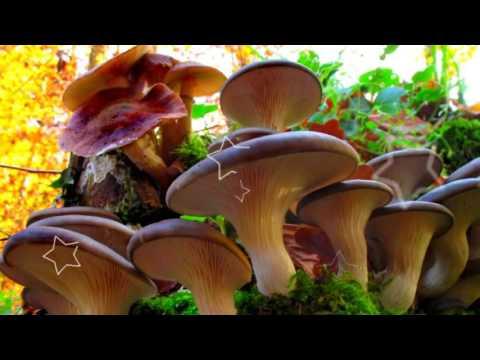 Диетические рецепты с грибами для белкового питания: блюда