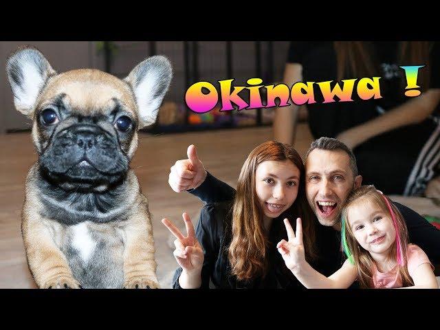 On prend un bain de bébés bouledogues français ! Calins et bisous avec Okinawa ! Chiot Kawaii