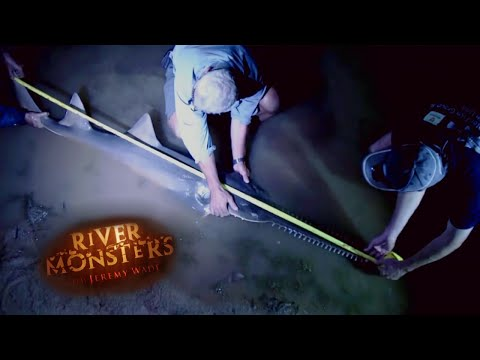 Jeremy Catches Seven Foot Sawfish! | SAWFISH | River Monsters