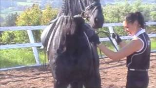 In Hand Work (Training the Young Horse) - Your Riding Success