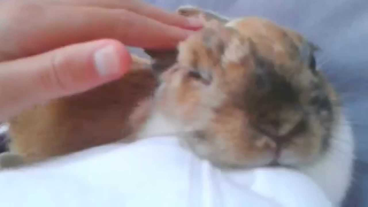 Lapin trop mignon youtube - Photo de lapin mignon ...