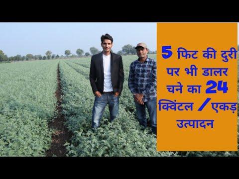 Download डालर चने की उन्नत व आधुनिक खेती कैसे करें हिंदी # SANJAY THAKUR #JAKHAMI FASLO KA HOSPITAL