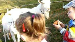 Moc rádi chodíme krmit kozy