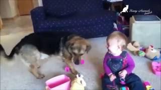 Дети и собаки. Дети играют с собаками. Смешные животные. Dogs and Child. Funny Animals