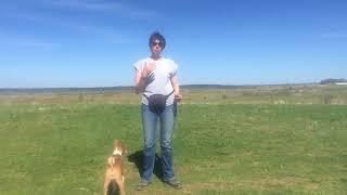 Как улучшить контакт с собакой на прогулке. Часть 1