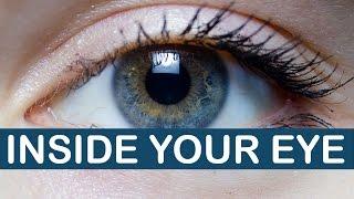 Can You Look Inside Your Eye? | LittleArtTalks