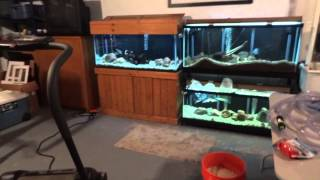 New African Cichlid Growout Tank