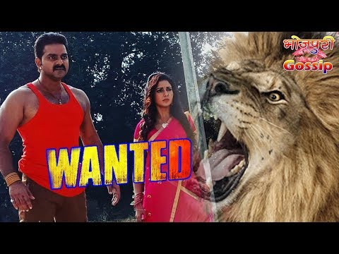 wanted film bhojpuri
