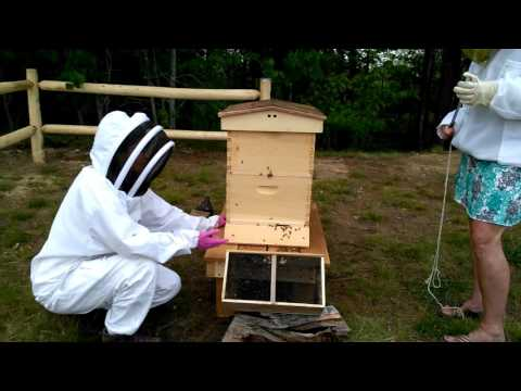 Sanborn Regional High School Bee Hive Arrival Part 2 of 2