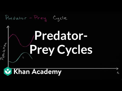 Predator prey cycle | Ecology | Khan Academy