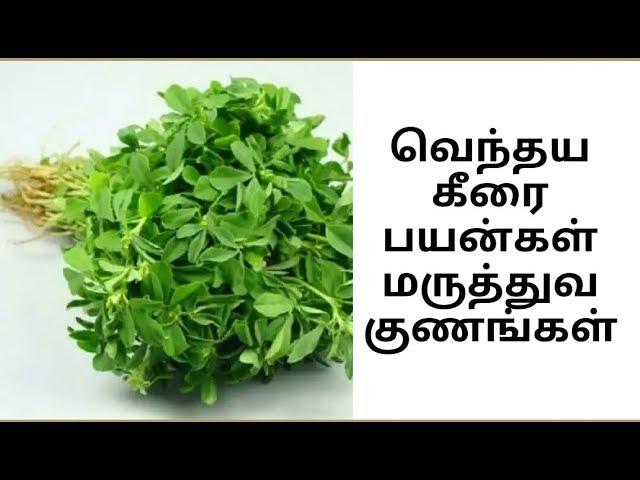 Venthaya Keerai வெந்தய கீரை பயன்கள் மருத்துவ குணங்கள்