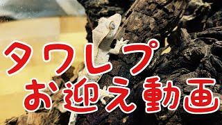 【生き物】タワレプお迎え動画