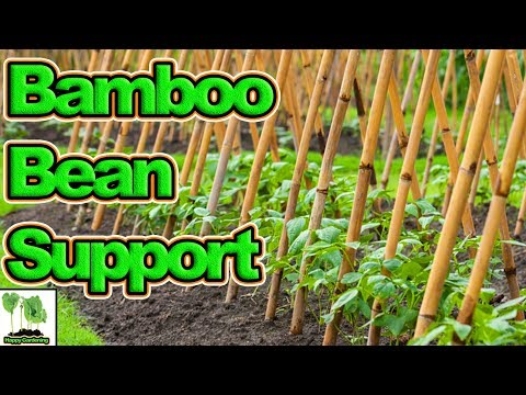 How To Build A Bean Support Structure