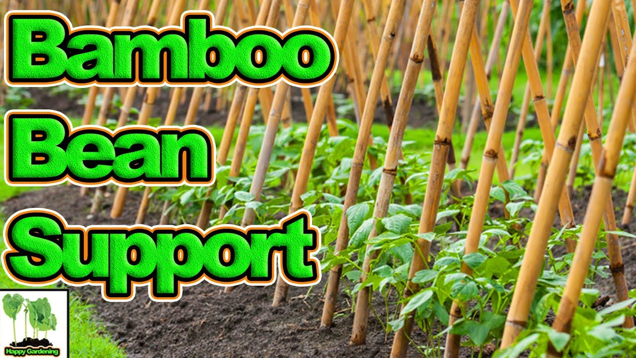 How To Build A Bean Support Structure - YouTube