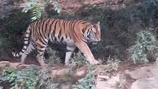 理科とか苦手で「多摩動物公園 2017.9 タスマニアデビル」 http://rikat...