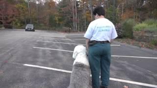 Tyler Muto Dog Aggression Seminar In Norwell Ma