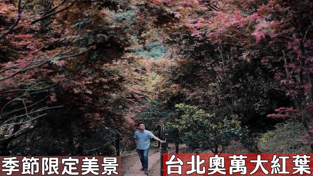 2021台北奧萬大紅葉來了!陽明山季節限定美景,不用跑到深山就可以看到一大片紅葉