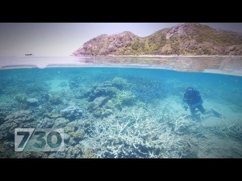 The Reef Pt 3: Where do we need to invest to save the Great Barrier Reef?