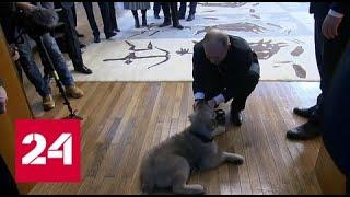 Вучич подарил Путину щенка Пашу - Россия 24