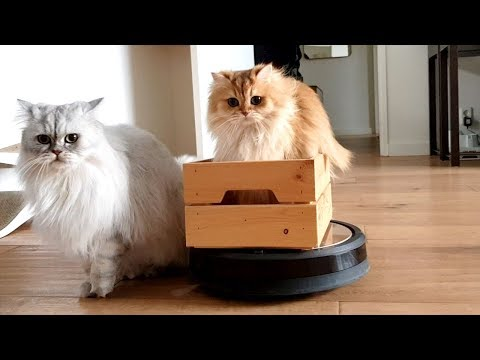 CATS VS VACUUM ROBOT | SMOOTHIE RIDING ROOMBA