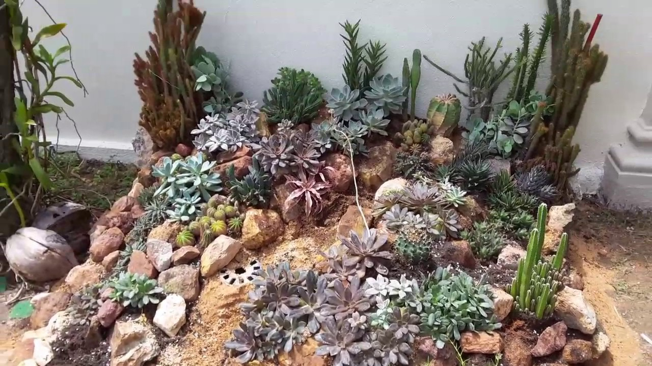 Latest Succulents Rock Garden Reinstall