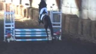 PROFESOR koń dla każdego - debiut w zawodach