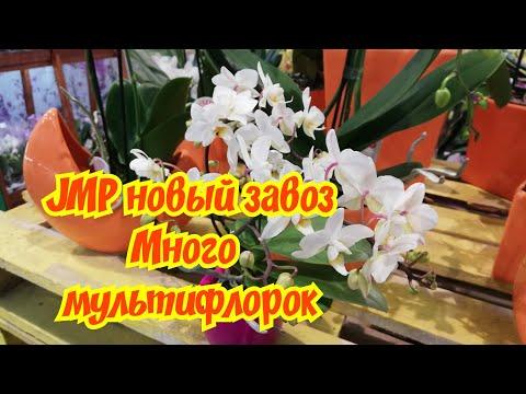 #JMP #фуд #сити Обалденные мультифлоры #Эквестрис #Soft #Cloud