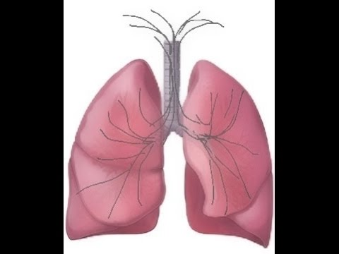 BREATH SOUNDS- Stages of Fluid Overload  Pneumonia