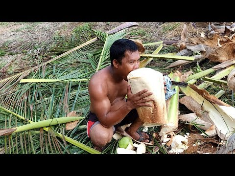 How to get Heart of (Coconut) Palm or Ubod ng Niyog