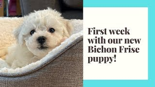 First week at home with our new Bichon Frise puppy Chewie