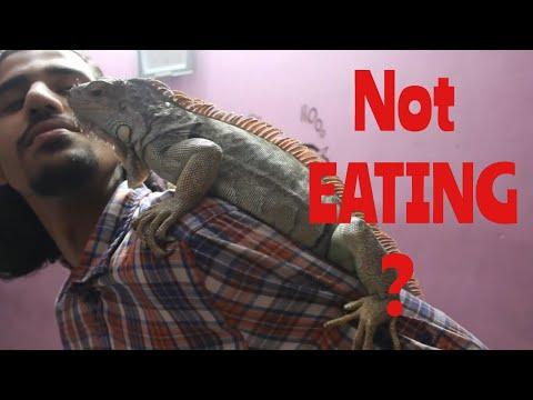 SHE's NOT EATING or MOVING? | Wildly Indian