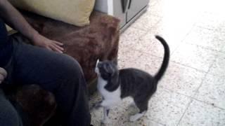 уникальная порода котособак