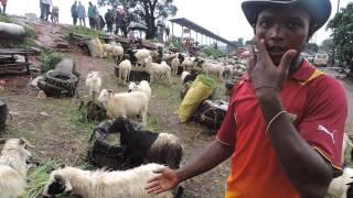 Guinée : À l'approche de la fête de Tabasky, le prix des moutons grimpe !