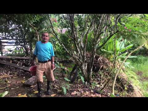 OUR AGRICULTURAL LAND AND OUR FUTURE PLANS  | FARMING/BUSINESS IN BOHOL PHILIPPINES