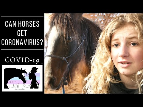 Can Horses Get Coronavirus - COVID-19? Lets Talk To A Vet!