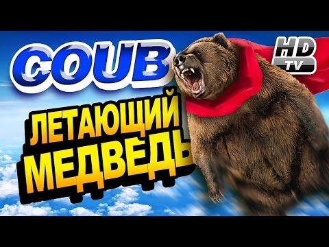 Смотри лучшее - Coub HD 20 - Летающий медведь - Flying bear