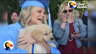 Puppy Surprise: Girl at Graduation Surprised with Puppy | The Dodo