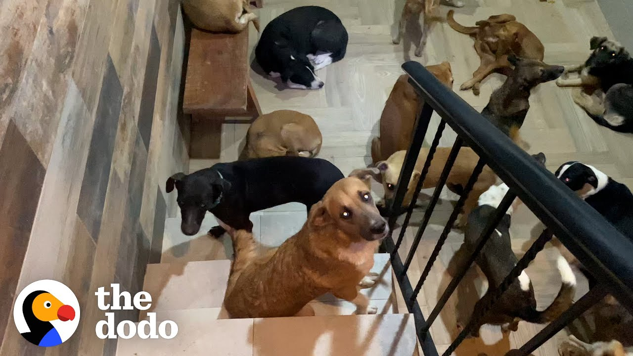 Guy Brings 300 Dogs Into His House During A Hurricane | The Dodo Heroes