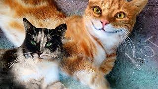 Смешные КОТЫ и КОШКИ  Кормим бездомных Котят Funny Cats Eats and Plays on the Street
