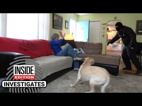 Dogs Tested To See Whether Theyd Defend Owner During Home Invasion