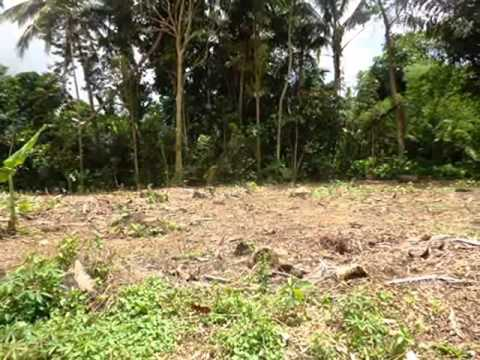 Exotic Property for sale in Bali, land for sale in Ubud Bali -- TJUB373