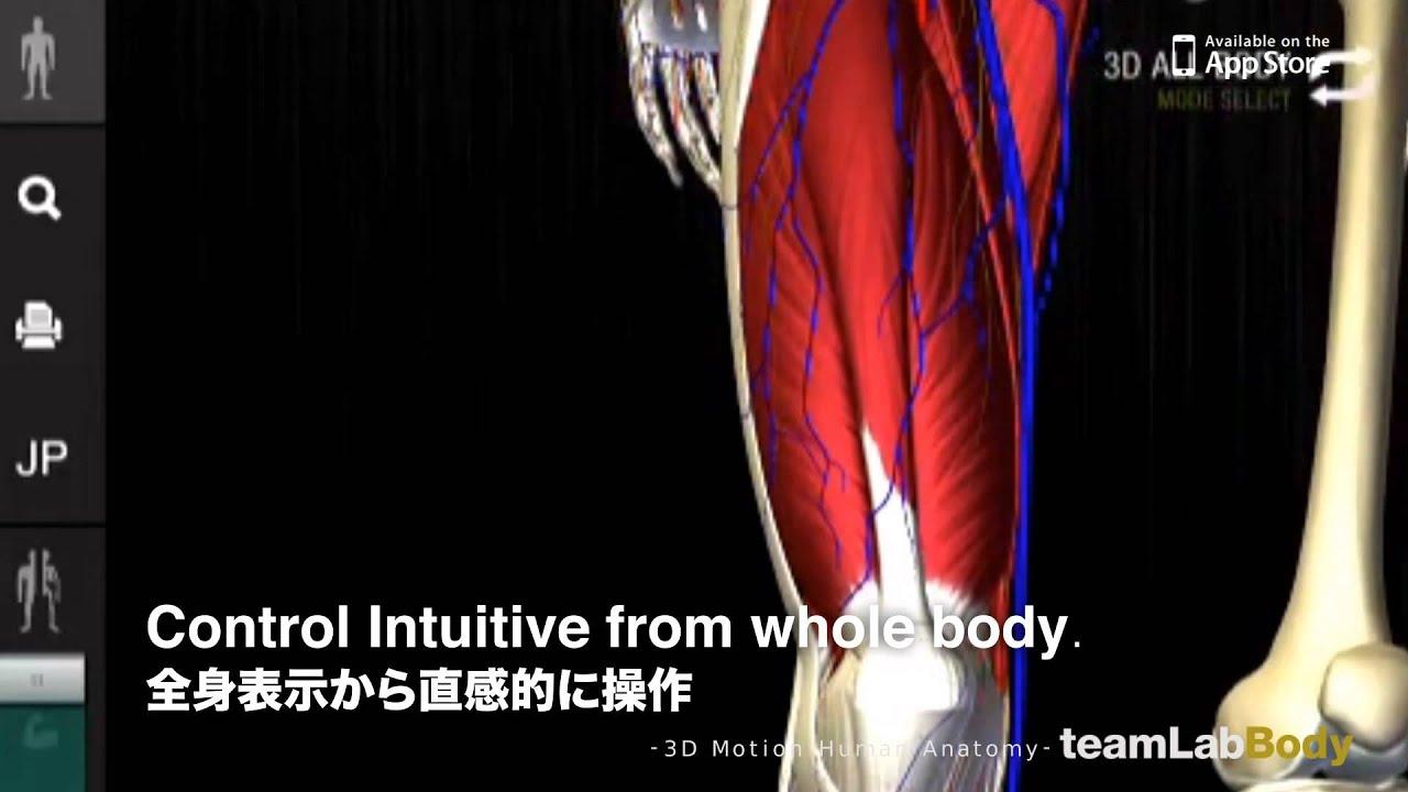 Teamlabbody 3d Motion Human Anatomy Youtube