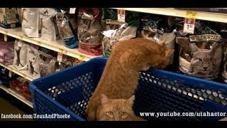 #cats Shopping At #petsmart - Off Leash