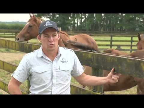 Just the Job - A Career in Equine Breeding and Stable Procedures