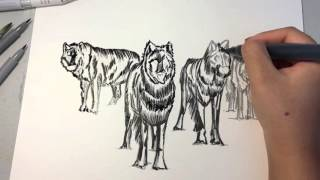 Draw with me - Wolves