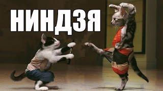 20 котов, которые постигли тайны ниндзя