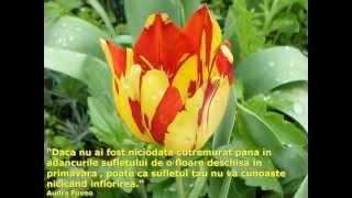 Intelepciune_florala