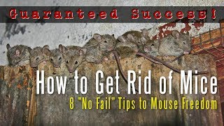 How to Get Rid of Mice in a House, Attic, Apartment, Garage, Etc.