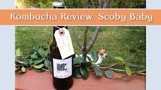 Kombucha Review: Goji Berry Cacao Scoby Baby Thumbnail